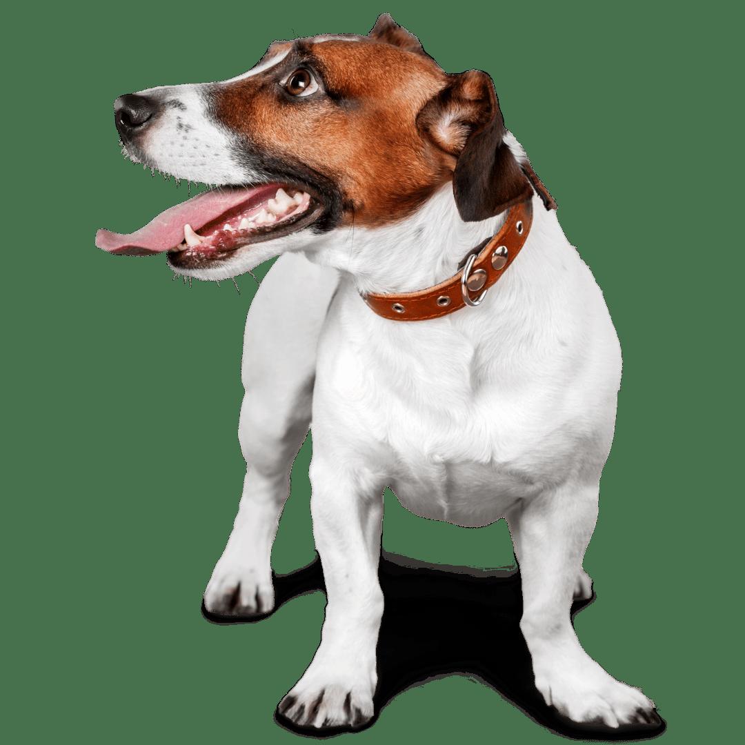 פט לאב חנות חיות (4)