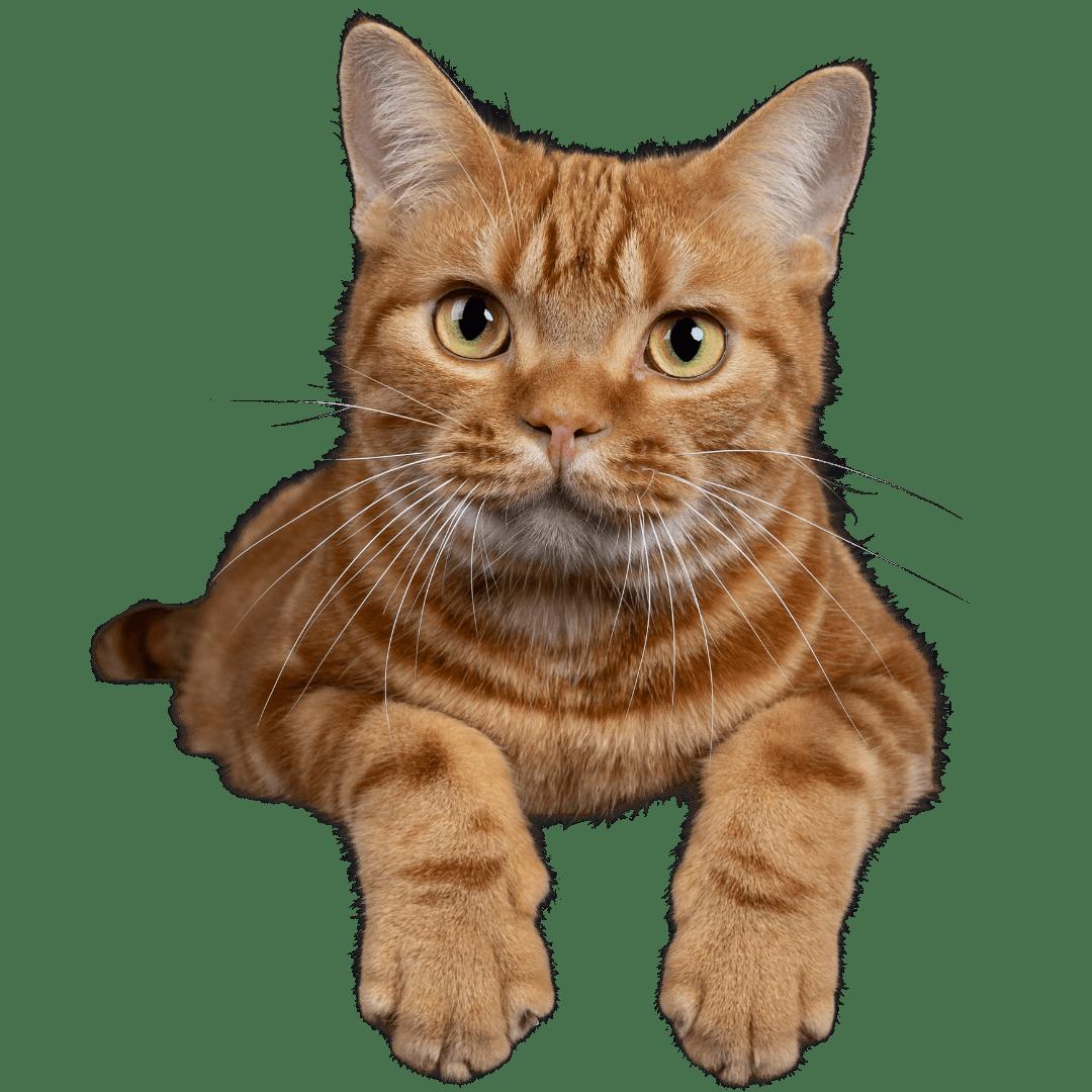 פט לאב חנות חיות (6)