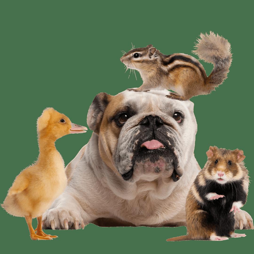 פט לאב חנות חיות (7)